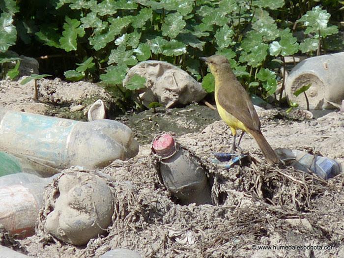 Humedales Tibanica, El Burro y Jaboque en Bogotá, están en riesgo de desaparición