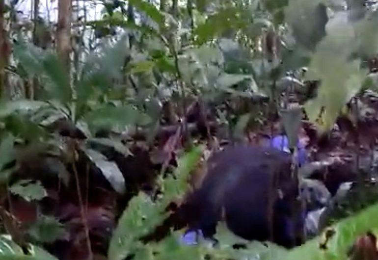 Policía ataca a misión humanitaria en el lugar de la masacre de Tumaco