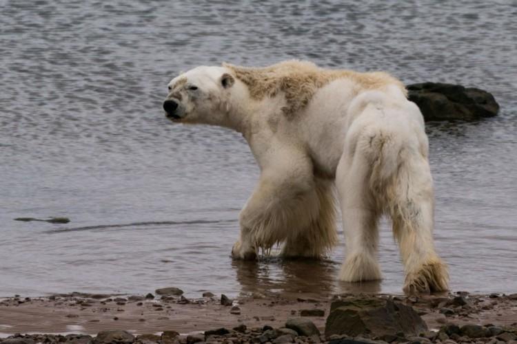 Nuevas imágenes evidencian los terribles efectos del cambio climático