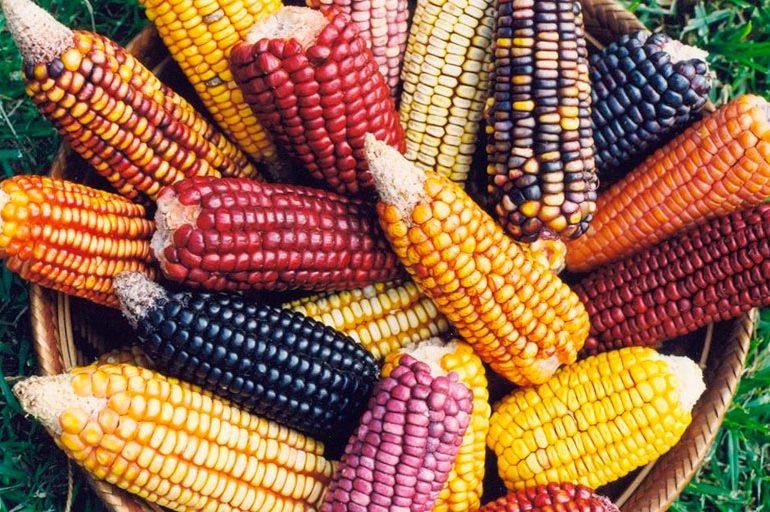 San Lorenzo en Nariño será territorio libre de semillas transgénicas