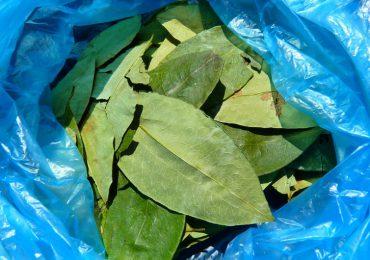 La erradicación de la coca en Arauca fue hecha por los campesinos