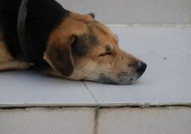 Envenenamiento de perros refleja cultura de intolerancia de colombianos: Plataforma ALTO