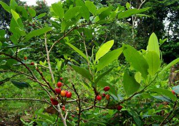 No es la coca, es la negligencia del Estado colombiano