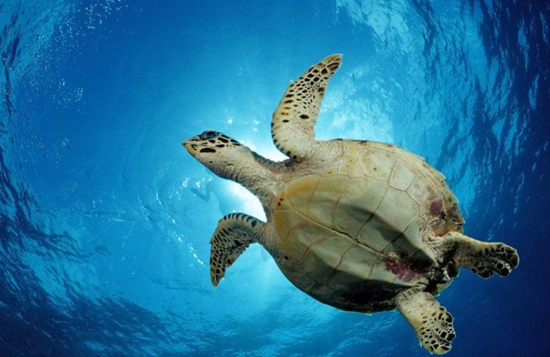 Tortugas ¿Cuál es su importancia y que hacer para protegerlas?
