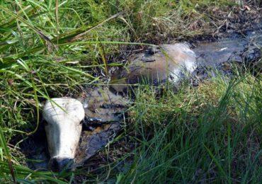 Petróleo por vida, los daños ambientales en la Ciénaga de Palagua