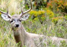 """Colombia """"ad portas"""" de la prohibición de la caza deportiva"""