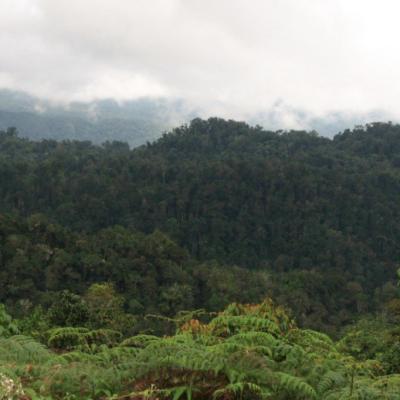 ANLA aprueba licencias ambientales en el único bosque de niebla de Tolima