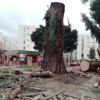 Bogotá mejor para todos -menos para los árboles-