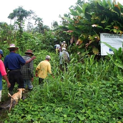 Empresario ganadero intenta despojar violentamente a familia en Curvaradó, Chocó