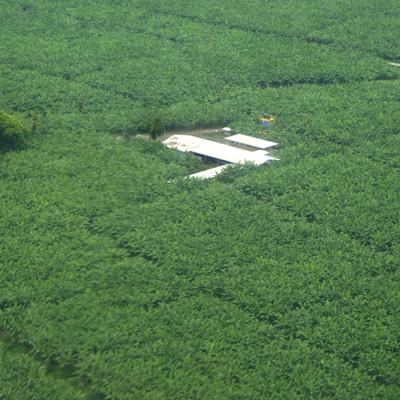 Más de 300 mil hectáreas se han entregado de forma irregular en Colombia