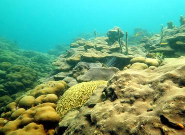 Canal de Acceso a Bahía de Cartagena destruiría más de 1.5 kilómetros de arrecife coralino