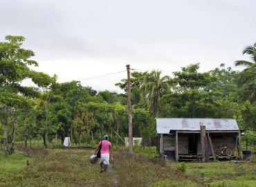 Proyecto de Agromar provoca daños ambientales en Bosque Primario en el Chocó