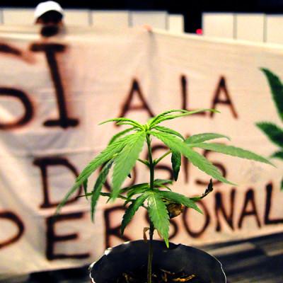 Decreto de Duque para prohibir dosis mínima es una persecución a consumidores de drogas
