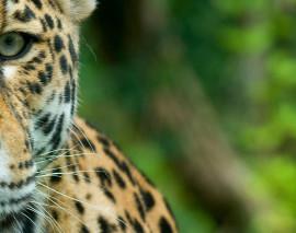 La deforestación uno de los mayores riesgos para los animales en Colombia