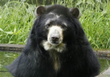Animales en Colombia, objetos y no sujetos de derechos