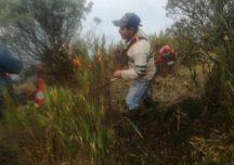 «De ruana y sombrero» campesinos apagaron incendio en páramo de Sumapaz