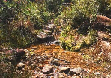Comunidades exigen Audiencia Pública Ambiental antes de construcción del Sendero de las Mariposas