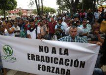 Campesinos cumplen cuarentena mientras Ejército  erradica forzadamente en Cauca