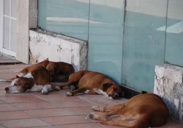 Los animales en situación de calle también merecen nuestro cuidado