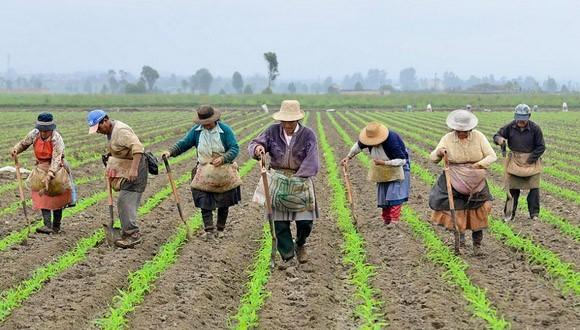 Gobierno debe priorizar  productos campesinos antes que importar alimentos e insumos
