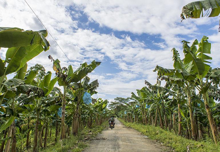 El despojo de tierras en el Bajo Atrato sigue vigente