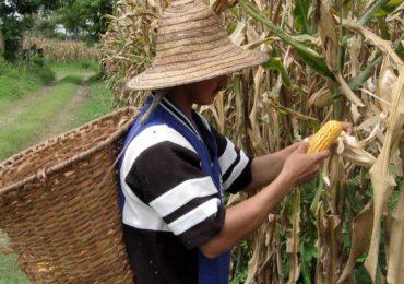 OtraMirada: realidad de campesinos durante pandemia