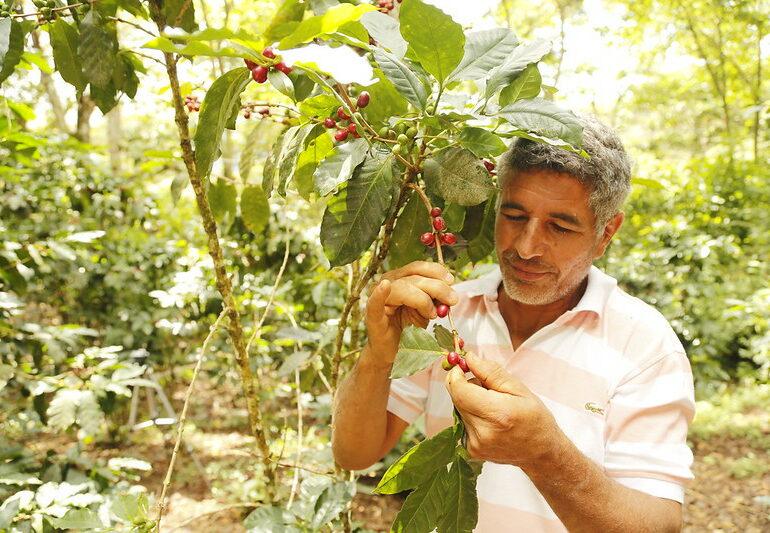Según la FAO el COVID 19 ha afectado al 87% del campesinado en Colombia