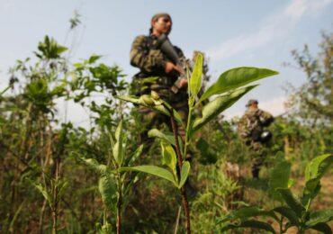 """""""Operaciones militares alteran sus resultados en la lucha del narcotráfico"""""""