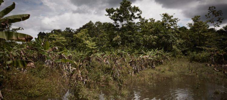 En riesgo la vida de lider de restitución de tierras Eliodoro Polo