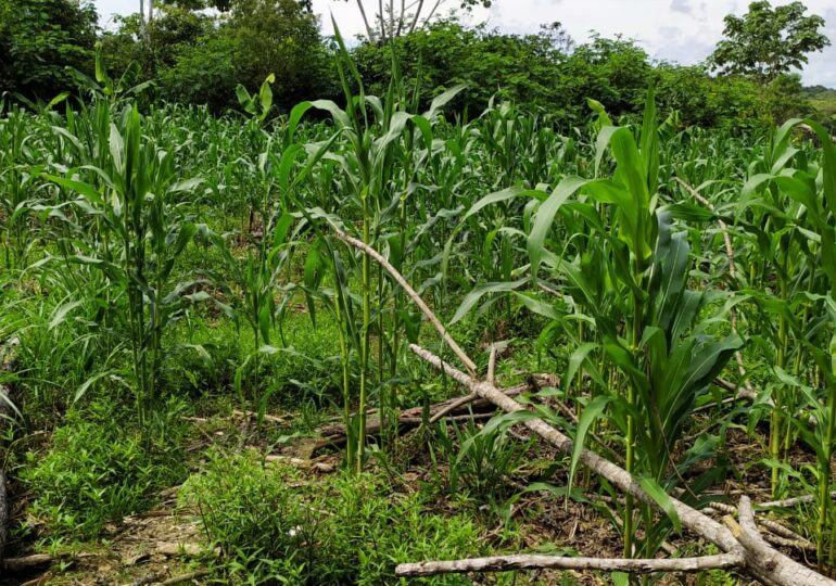 Operativo de erradicación deja a un menor herido en Zona de Reserva Campesina Perla Amazónica