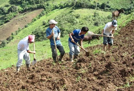 Experiencias formativas para la promoción del empleo y trabajo joven en la ruralidad: avances y temas pendientes